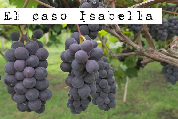 La Lista Negra de las cepas. El caso Isabella.