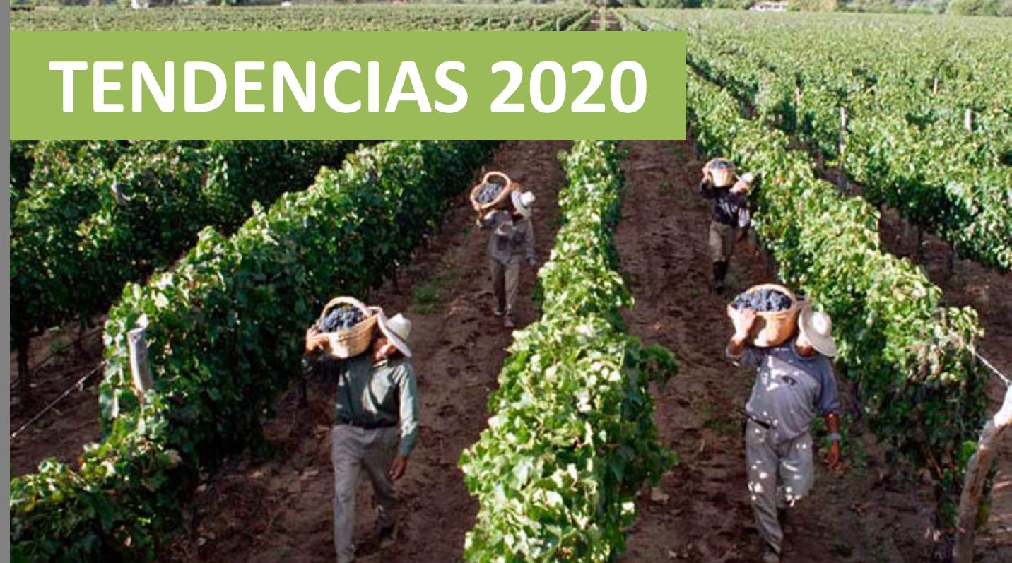 Las seis tendencias que marcarán la agenda 2020 en materia de vinos